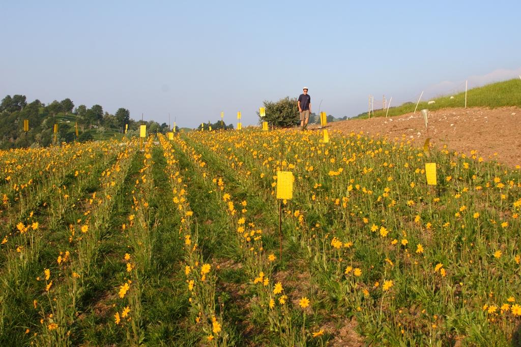 fioritura 2014 e cromotrappole