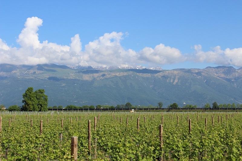 vigne e piancavallo